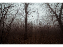 10. Blair Witch Project