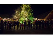 Dans kring julgran