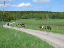 Huddinge fjärde bästa miljökommun i länet. Foto: Richard Vestin