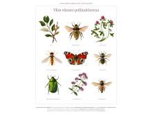 Vara vanner pollinatorerna
