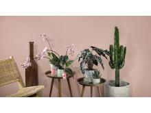 Interflora vårkollektion