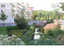 Öppen dagvattenlösning. Bild: Stockholms stad.