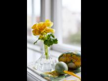 Begonia - en favorit till påsk_web