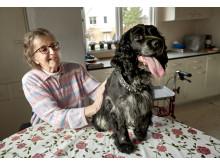 Salsa utsedd till Årets bragdhund