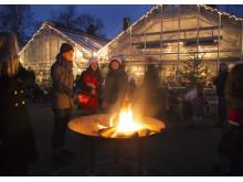 Stämningsfull jul på Rosendals Trädgård
