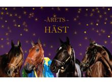 Kandidaterna till Årets Häst
