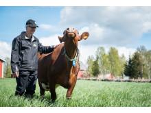 Alla som levererar mjölk till Gäsene Mejeri är godkända enligt Svenskt Sigills certifiering