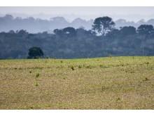 Sojamarker i Brasilien