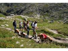 Passwanderung mit dem Bernhardiner in Martigny (Wallis)