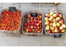 Scandinav_8MW5. Äpplen