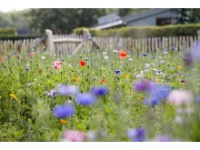 Blomsteräng Rosendals Trädgård