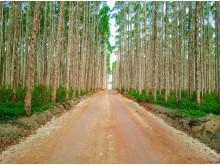 Brasilian_forest