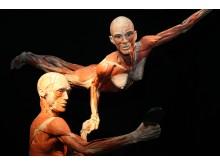 Anatomi för alla