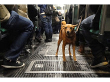 Hund i kollektivtrafik