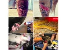 collage blandat djur