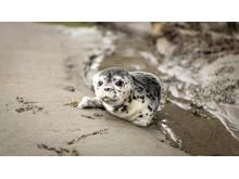 Biotechnologie für Robben