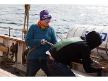 Kajsa från lag väst och Ung Cancer hissar segel på T/S Britta