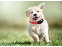 Yepzon One, dog