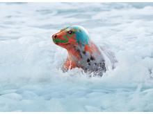Färgrester i avloppet påverkar livet i sjöar och hav