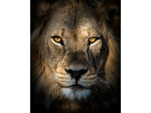MatthieuRivart_France_Open_WildlifeOpencompetition_2018