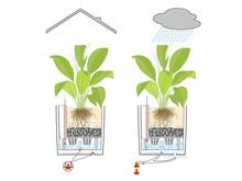 Maximale Pflanzenfreude bei minimalem Pflegeaufwand