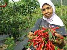 Hjälp till försörjning i Indonesien efter tsunamikatastrofen