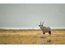 CS-271116-namibia_rx10-028