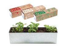 Inspiration till vårens odling - Foodie Garden (3 plantor)