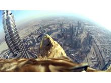 Dubai Darshan