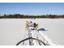 Hundspann Dalarna