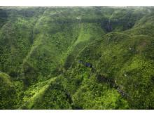 Mauritius_Parc National des Gorges de la Rivière Noire ©MTPA_Bamba