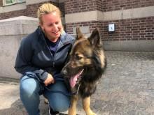 Polishunden Keegan och polisen Åsa.