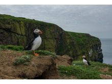 ©Sam Hobson_UK_SonyNaturePuffin19