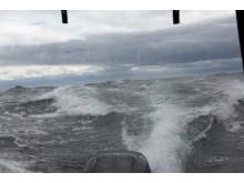 Ruff Sjö på Ålands hav