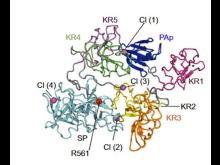 Plasminogenstruktur