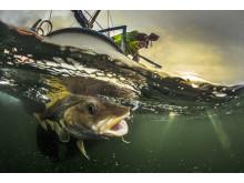 My father fishing cod - Audun Rikardsen
