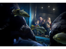 Besökare kikar in i ett akvarium på Havets Hus