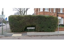 The hedge where Maureen's handbag was found