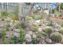 Ökenblomning, som del i utställningen Kaktus i kubik, signerad Peter Korn
