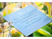 Plakett vid minnesträd för organdonatorer vid Falu lasarett