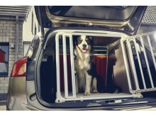 2019_FORD_FOCUS_DOGBOX_1