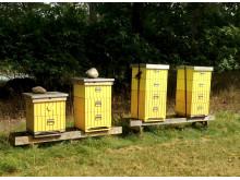 De kungliga bikuporna på Haga