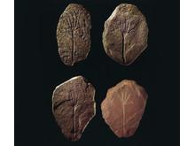Håndtegnssten_Frederikssund Museum_CMYK. Kredit ROMU