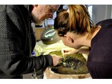 Arkæologer på arbejde