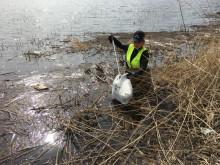 Gästrike återvinnare plockar skräp vid vattnet för att rädda haven.