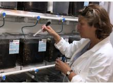 Cecilia Berg i laboratoriet