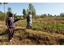 Innan agroforestry