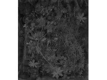 Martin-Bergstrom-Flora-Hysterica-3-Pattern