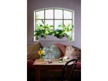 Odla ätbart hemma med den hydroponiska odlingslådan Harvy