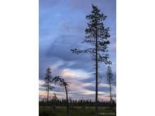 Nirra, Lapland Sweden